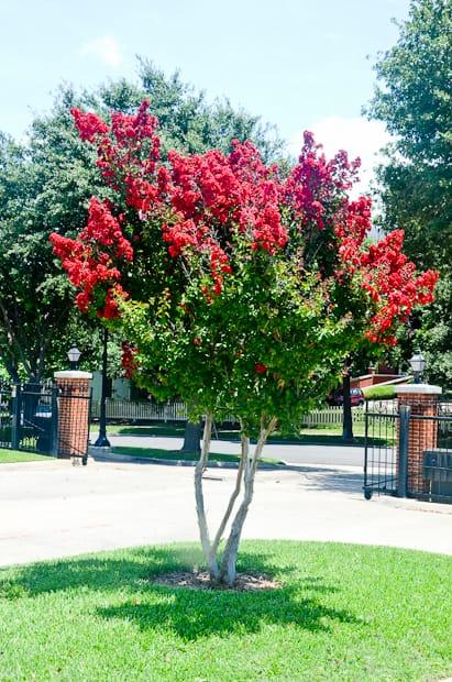 Trees Shrubs Amp Plants Taylor Landscaping