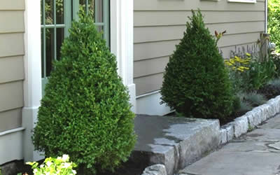 Trees Shrubs Amp Plants Taylor Landscaping