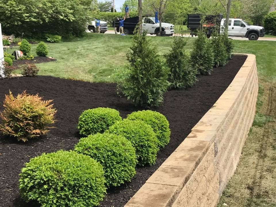 Tree Installation by Taylor Landscaping Louisville, KY